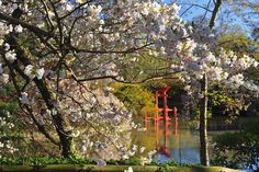 The Shinto Shrine at Brookyn Botanic Garden