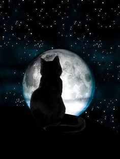 black cat moon and like OMG! get some yourself some pawtastic adorable cat apparel! Drawing Skills, Cat Drawing, Sketch Drawing, Beautiful Moon, Beautiful Cats, Black Cat Art, Black Cats, Photo Chat, Cat Wallpaper
