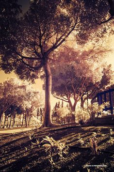 Magic Photograph - Magic Trees by Cristo Bolanos