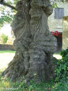"""""""Parfois, un arbre humanise mieux un paysage que ne le ferait un homme"""" [Gilbert Cesbron]"""