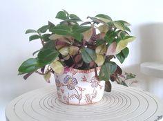 Petit pot à succulentes, ces délicieuses plantes grasses et charnues.