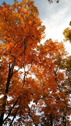 My Yard, Fall 2015