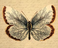 Vintage Butterfly Unique image of tree in the wings by hartthings, $15.00