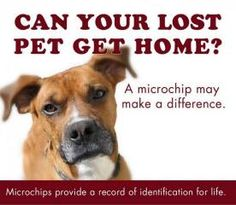 The Importance of Microchips in Pets
