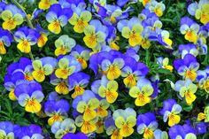 Fotos de flores, preciosas, bonitas, hermosas   Galerías de Fotos