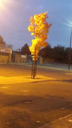 Autumn tree with streetlights adding the yellow effect