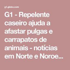 G1 - Repelente caseiro ajuda a afastar pulgas e carrapatos de animais - notícias em Norte e Noroeste