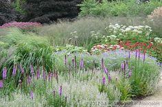 Trentham Estate- Piet Oudolf, garden designer.