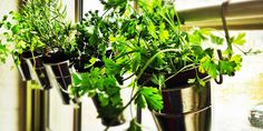 http://best5.it/post/erbe-aromatiche-come-coltivarle-casa/
