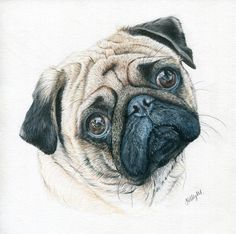 This gal is a friend of mine from college and she is super talented and fun! Give her a call!!  Pug | 8 x 8 | Contact me for your own custom pet portrait!