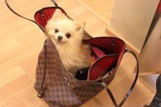 Louis Vuitton Canvas Louis Vuitton Handbags #lv bags#louis vuitton#bags