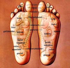 Excellent foot reflexology diagram