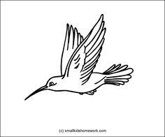 Hummingbird outline picture