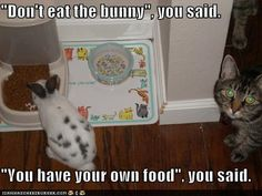 """""""Don't eat the bunny,"""" you said.  """"You can have your own food,"""" you said."""