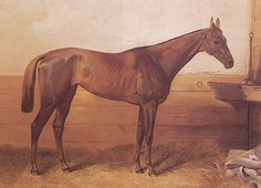 """Kincsem literally translates to """"my treasure"""" in Hungarian, and proved to be worthy of his name.  She started racing in 1876 when she was 10 years old, and remained undefeated winning all her 54 races. Now that's legendary!  Check out some other great horses in history here:  http://central.parellinaturalhorsetraining.com/2013/08/the-wonder-of-the-horse-seven-great-horses-from-throughout-history-2/"""
