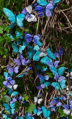 Because...butterflies.
