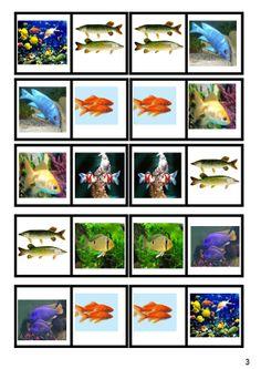 * Domino: Vissen! 3-4 Water Animals, Beautiful Fish, Sea Fish, Summer Crafts, Habitats, Dominos, Lettering, Activities, Strand