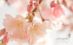 Bildresultat för pink blossom photography