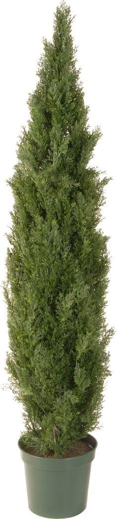 Faux Arborvitae Tree