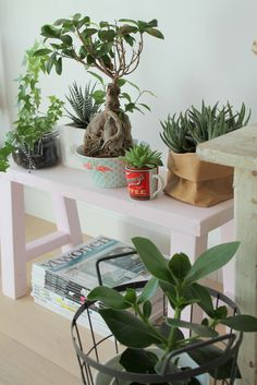 Planten in huis zijn hartstikke hip. Dat is je vast niet ontgaan. Planten zorgen…