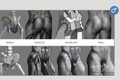 Anatomy Next - Anatomy - anatomy, key features, and proportion mesurements Anatomy Back, Leg Anatomy, Anatomy Poses, Muscle Anatomy, Anatomy Study, Anatomy Drawing, Human Anatomy, Figure Drawing Reference, Body Reference