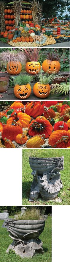 LOVE the pumpkins with 'hair'!