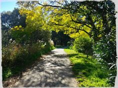 A beautiful stretch of path along the Cooks River in Marrickville Sydney.