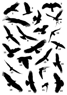 Free checklists to many birding destinations in and around Europe, trip reports and a raptor silhouettes printout. Hawk Silhouette, Vogel Silhouette, Silhouette Tattoos, Small Eagle Tattoo, Eagle Tattoos, Trendy Tattoos, Unique Tattoos, Small Tattoos, Eagle Outline