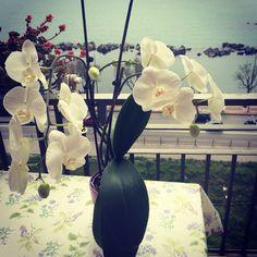 la mia orchidea.... e pensare che tempo fa l'avevo data per spacciata....le cose fatte con amore hanno i loro risultati soddisfacenti