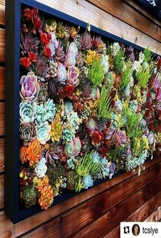 have the wall we have the succulents. Heres a little creativity inspiration . - You have the wall we have the succulents. Heres a little creativity inspiration .You have the wall we have the succulents. Heres a little creativity inspiration . Succulent Wall Planter, Succulent Frame, Vertical Succulent Gardens, Vertical Garden Design, Succulent Landscaping, Wall Planters, Concrete Planters, Vertical Bar, Walled Garden