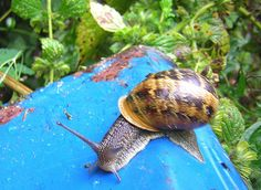 wikiHow to Care for Snails -- via wikiHow.com