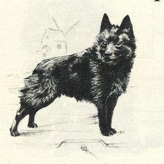1945 Vintage Dog Print - G. Cook