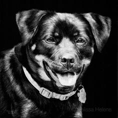 Coco | Melissa Helene 8x8 scratchboard pet portrait www.melissahelene.cim