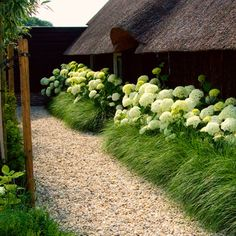 hydrangea bushes as underplanting - Google Search