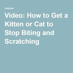 Video: How to Get a Kitten or Cat to Stop Biting and Scratching
