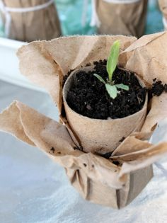 Compostable Brown Paper Seedling Pots :: Hometalk