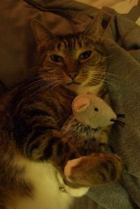 Zazu has this same rat and it's his favorite.  The eye is pulled out and so are the whiskers.. lol
