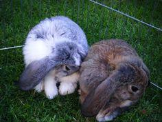 Synchronized bunnies - February 4, 2013