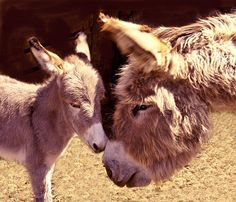 Aww Mom Give Us A Kiss. Photo by spangles44