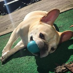 go balls out y'all - it's friYAY! #sunsoutfunsout  by thedailywalter