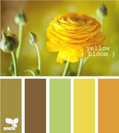 New living room paint color ideas yellow design seeds ideas Colour Pallette, Colour Schemes, Color Combos, Paint Combinations, Design Seeds, Colour Board, World Of Color, Mellow Yellow, Orange Yellow