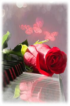 Animated Red Rose on a Piano