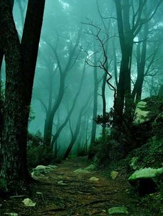 The Mystic Forest ~Sintra Portugal