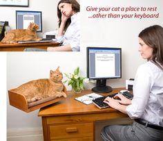 A Unique Desktop Cat Bed - What A Great Idea!