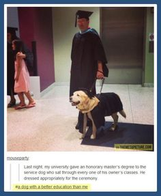 Service dog get honorary degree.