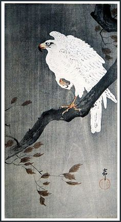 https://flic.kr/p/98ccv9 | Goshawk (c1910-23) by Koson Ohara / Ohara Koson | Koson Ohara [Japanese woodblock printmaker 1877-1945] Kacho-e is the Japanese word for prints of birds and flowers. Koson Ohara is the best-known printmaker for kacho-e in the twentieth century. During Koson's lifetime his prints were exported in large numbers to the United States. Koson Ohara is also know under various combinations of the names Shoson and Hoson