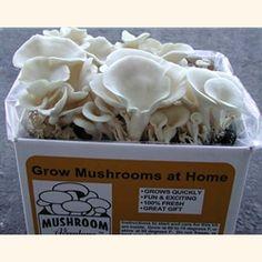 Grow mushrooms in a box