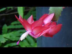 Horta, frutas e flores no jardim: Flor de Maio