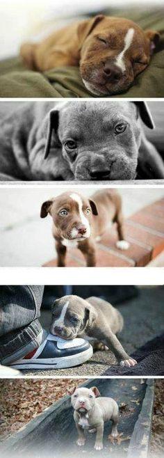 More beautiful pups