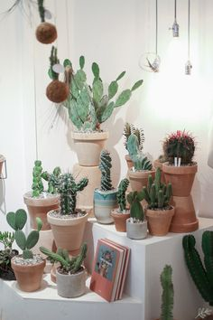 Kaktuskauppa Kaktus København Kööpenhaminassa | KUKKALA Planter Pots, Home And Garden, Patio, Green, Kitchens, Yard, Porch, Terrace, Plant Pots